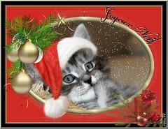 Calysse (home77_Pascale) Tags: christmas cat chat fte nol chaton ecard cartevirtuelle croisment calysse