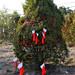 360_Trees_2011_154