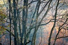 remembering the color. . . . (Ed Brodzinsky) Tags: november trees color elkcreek edbrodzinsky sailsevenseas