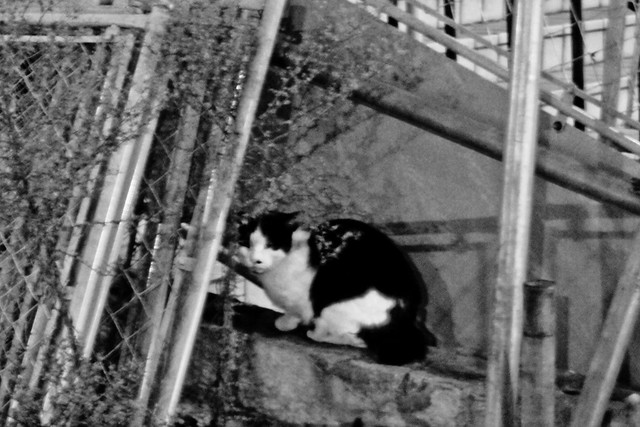Today's Cat@2011-12-23
