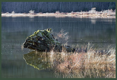 squamish river (tesseract33) Tags: world light color green nature water river landscape log nikon logs estuary rivers squamish nikondigital squamishriver squamishestuary nikond300 tesseract33 peterlangphotography blinkagain squamishphotographers