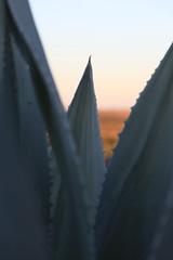 San Miguel de Allende (guillermo.sandersg) Tags: atardecer laguna parvada reserva vuelo