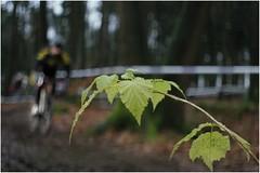 <<--- Kerstcross Eibergen (Thomas Sommer) Tags: bokeh background blurred biker flektogon cyclocross 2835 gow eibergen kerstcross