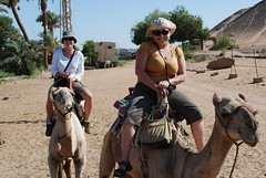 Camel Riding in Aswan, Egypt (www.livingthedreamrtw.com) Tags: africa animals egypt middleeast riding camel aswan camels