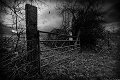 Beware Of The Bull... (MFotography*) Tags: wood trees sky bw cloud blur bird field leaves sign metal digital photoshop canon dark eos countryside flying wire bush gate post beware branches sigma bull 1020mm barbed lightroom 500d sudbry