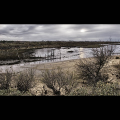 Paysage Bassin d'Arcachon
