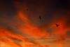 Amanecer dia 01/01/2012 (Feliz año 2012) (Urugallu) Tags: españa color canon ventana navidad casa spain flickr fiestas ciudad asturias amanecer pajaros cielo nubes urbano felicidad gijon gaviotas xixon 2012 añonuevo vuelo asturies dia1 tonos 50d principadodeasturias nuevodia alalba urugallu olétusfotos mygearandme primeramanecerdelaño 01012012 feliz2012