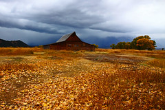 Golden carpet (Ross Forsyth - tigerfastimagery) Tags: autumn usa mountains fall leaves clouds america landscape golden scenery barns northamerica wyoming np nationalparks grandteton wy fallcolours grandtetonnationalpark gtnp mormonrow mormonbarns