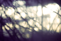 (A looking glass heart.) Tags: trees winter window nature glass blurry bokeh mystical processed colorprocessed