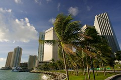Windy Miami (ursblick) Tags: blue trees sea summer usa storm tree green beach clouds america hotel meer wind miami sommer wolken windy palm amerika miamibeach sonnenaufgang palme baum intercontinental sturm