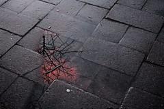 Reflection (Kristijonas Dirse) Tags: reflection lithuania vilnius wilno cotcpersonalfavorite kristijonasdirseportfolio
