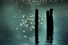 10fTPOles (SteveStudio.GrandPaparazzi) Tags: sunlight lake reflection water piers poles stevestevesteve