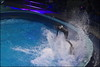 Dolfinarium & Frans Bauer _ 36 (@2008) Tags: people holland netherlands zoo dolphin dolfinarium harderwijk dolfijn fransbauer a900 zeiss135mmf18 sal135f18z sal135f18za