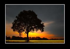 Landschap (Theo Kelderman) Tags: holland netherlands canon landscape zonsondergang nederland boom overijssel landschap theokeldermanphotography oktober2011