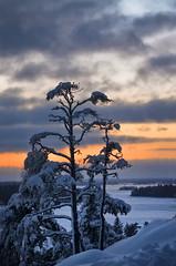 Afternoon darkness (Antti-Jussi Liikala) Tags: park bridge winter sunset lake snow cold tree finland nokia deep tampere pyynikki silta viikinsaari pyhjrvi saunasaari rajasalmi ginordicjan12