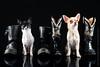 Marketing-photo-shoot-7 (Rob Orthen) Tags: dogs koiria roborthenphotography mainoskuvaus koirakuvaus