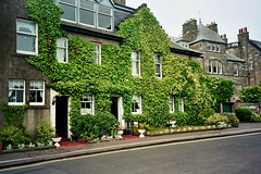 Ivy covered home, St Andrews, Fife, Scotland (caledoniafan) Tags: road street old houses plants house green nature beautiful garden coast scotland town dorf village fife alt strasse natur cottage pflanzen scenic haus ivy streetlife stadt standrews grn footpath bushes garten hiddenplace kste schottland huser efeu stadtleben gebsch fussweg malerisch bsche beautifuldetail strasenleben townscenery caledoniafan