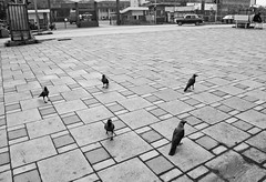 Sunday Meeting - Of Sorts (lavkeshbhatia) Tags: bw triangle meeting tiles crow pca seaface thepca