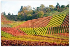 Autumn Vineyard (Habub3) Tags: park wood travel autumn red panorama holiday green rot fall nature colors leaves lines yellow forest germany garden landscape deutschland search interesting nikon europa europe stuttgart urlaub herbst natur vine explore gelb vineyards grn blatt landschaft fp wald garten bunt vacance 2012 reise wein farben weinberg d300 weinberge textur serach remstal habub3