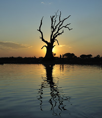 Tree at Sunset_HXT2750 (ohmytrip) Tags: wood bridge sunset sunlight reflection nature water horizontal architecture outdoors myanmar rippled idyllic connection mandalay clearsky amarapura ubeinbridge traveldestinations colorimage builtstructure mandalaydivison tranquilitysilhouette