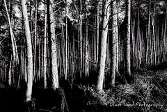 Forest (Oliver Wood Photography) Tags: trees forest timber macclesfield