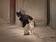 Chats dans la rue (Montluon - France) 2008 ('Yannewvision') Tags: street france cute cat chat pretty neko  rue auvergne  mignon kawai  montluon kawa  yannewvision