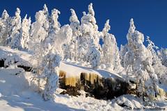 Koli - Suomi - Finland (Sami Niemeläinen (instagram: santtujns)) Tags: park winter snow nature forest suomi finland landscape north national lumi talvi maisema metsä kansallispuisto luonto koli karjala lieksa carelia pielinen pohjois