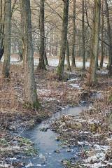 stream of frozen dreams. (Amanda Carlsson) Tags: trees winter cold ice grass forest d50 50mm frozen nikon bare ginordicjan12