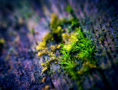 Growing Through the Dead (Jordan Stern) Tags: door wood plants plant macro green up dead wooden log close purple nail grow logs nails growing through