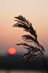 - 31/366 - (Pieter D) Tags: sunset sun plant landscape 365 day31 366 project365 pieterd project366 mostly365 365the2012edition 31012012