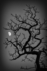 - 32/366 - 5/52 - (Pieter D) Tags: bw moon white black tree silhouette 365 day32 2012 week5 366 project365 pieterd project366 mostly365 01022012 522012 52weeksthe2012edition 365the2012edition weekofjanuary29