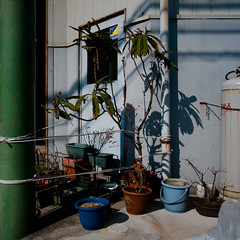Industrial Roped Off Garden (jacob schere [in the 03 strategically planning]) Tags: door shadow urban plant japan digital garden square tokyo industrial shadows tank gardening jacob 4 rope off communication pot gr tied lucid bound iv ricoh potted industrialization roped m2c schere dgr jacobschere lucidcommunication