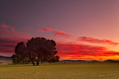 (Antonio Carrillo (Ancalop)) Tags: sunset espaa tree field canon de landscape arbol atardecer la spain europa europe mark paisaje murcia filter cruz ii 09 5d lopez antonio 1740mm f4 carrillo neutral gradual caravaca gnd8 ancalop
