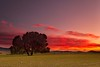 (Antonio Carrillo (Ancalop)) Tags: sunset españa tree field canon de landscape arbol atardecer la spain europa europe mark paisaje murcia filter cruz ii 09 5d lopez antonio 1740mm f4 carrillo neutral gradual caravaca gnd8 ancalop
