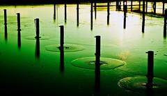 Grön (Peter Hillhagen) Tags: gron fotosondag fs120205