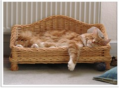 Bei diesen Temperaturen gehe ich nicht vor die Tr! - I dont want to go outside today! (Jorbasa) Tags: red orange pet cold rot animal cat germany deutschland ginger hessen oscarwilde couch sofa mainecoon katze kater tier tomcat klte wetterau temperatur jorbasa redtabbywhite