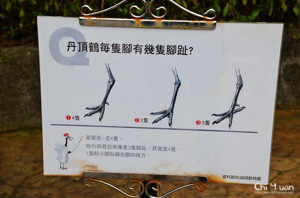 木柵動物園鳥園10.jpg