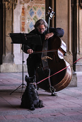 Audience (emilyaleventhal) Tags: nyc musician music usa dog newyork animal centralpark streetphotography cello