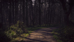 Dark Path (Netsrak) Tags: trees light shadow tree green nature leaves forest germany way landscape deutschland licht leaf woods outdoor path natur eifel nrw grn blatt landschaft wald bltter bume schatten baum nordrheinwestfalen weg rheinbach forst