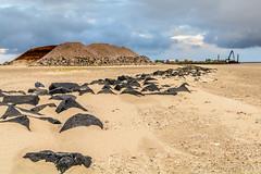Ameland - Kijk op de dijk 1 (JnHkstr) Tags: strand vakantie ameland 2016 hollum kijkopdedijk