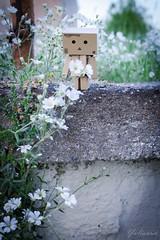 (yulianna_me) Tags: toy danboard
