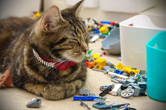 Toys..mine, all mine (mru24) Tags: colour animal cat canon toys photography lego bricks 40d