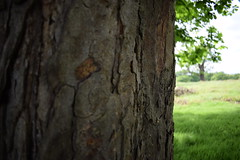 Tree: Depth of Field (ItsMeBjorn) Tags: park city urban london nature naturallight richmondpark londonpark outdoorlight nikond3300
