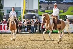 Pintos_Equitana_2016-0592 (tokerpress) Tags: messe pferde shou pintos tokerpress alexandertoker equitanaopenair ctokerpress2016 gestütgoldenepintos