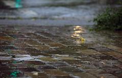 Mal wieder Regen (2) (Rdiger Stehn) Tags: 2016 2000er 2000s canoneos550d europa mitteleuropa deutschland germany norddeutschland schleswigholstein kiel stadt strase kielblcherplatz spiegelung reflection regen wasser brgersteig