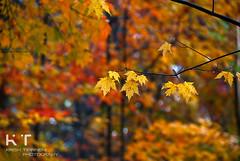 .Nature Colors. (.krish.Tipirneni.) Tags: trees usa fall nature colors leaves maple nikon shenandoah shenandoahnationalpark 18200vr d80