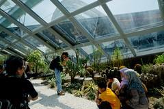 Marina Bay Sands Gardens by the Bay (Flower Dome) _DSC_3115 (Richard Chai) Tags: singapore richardchai flowerdome gardensbythebay williamcho mindchicclub myrighteyeisaviewfinder wwwmindchicclubcom wwwmyrighteyeisaviewfindercom