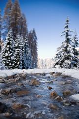 into the wild (chipsmitmayo) Tags: schnee trees winter snow ice river happy nikon bokeh bach friday fluss eis alto hbf sdtirol tannen adige dolomiten d80 schwaige hannicker