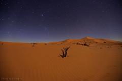 Startrails with Dunes (TARIQ-M) Tags: texture landscape star sand waves desert dunes riyadh saudiarabia بر startrails الصحراء نجم الرياض صحراء رمال رمل نجوم الدهناء طعس كانون المملكةالعربيةالسعودية canon400d الرمل خطوط صحاري canonef1635mmf28liiusm نفود الرمال كثبان براري تموجات تموج نفد صحراءالدهناء canoneos5dmarkiifullfram