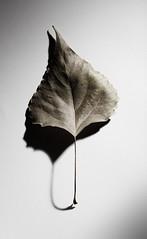 Black and white loneliness. (hoboton) Tags: bw minimalism